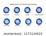vector illustration of rod... | Shutterstock .eps vector #1171114015