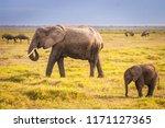 Elephant And Elephant. Kenya....