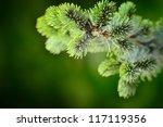 branch blue fir tree - stock photo