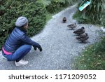 woman looking at ducks in a row | Shutterstock . vector #1171209052