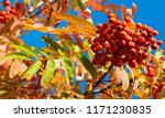 autumn landscape photography ... | Shutterstock . vector #1171230835