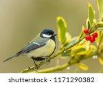 great tit  common  colourful... | Shutterstock . vector #1171290382