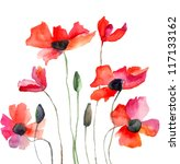 Colorful Poppy Flowers ...