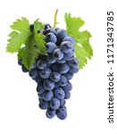 grapes on a white background | Shutterstock . vector #1171343785