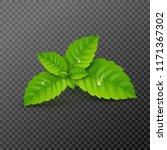 fresh mint leaf. vector menthol ... | Shutterstock .eps vector #1171367302
