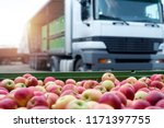 fruit and food distribution.... | Shutterstock . vector #1171397755