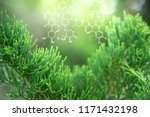 plants background with... | Shutterstock . vector #1171432198