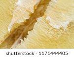 detail of pomelo fruit. macro... | Shutterstock . vector #1171444405