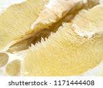 detail of pomelo fruit. macro... | Shutterstock . vector #1171444408