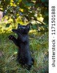 portrait of a beautiful black... | Shutterstock . vector #1171501888
