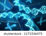 3d illustration x chromosomes...   Shutterstock . vector #1171536475