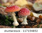 Two Spotted Toadstools In The...