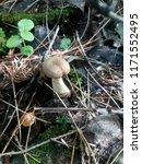 mushroom spilled in the forest...   Shutterstock . vector #1171552495