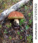 a beautiful big mushroom...   Shutterstock . vector #1171552522