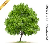 beautiful tree realistic  on a... | Shutterstock .eps vector #1171560508