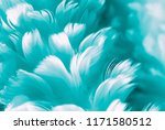 turquoise blue feather photo... | Shutterstock . vector #1171580512
