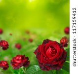 Stock photo  red roses 117159412