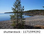 pine on the rocky shore of the... | Shutterstock . vector #1171599292