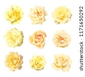 Collection Gentle Soft Flowers Rose - Fine Art prints