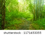 the sunshine forest trees.... | Shutterstock . vector #1171653355