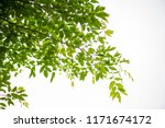 abstract bokeh leaf pattern... | Shutterstock . vector #1171674172