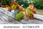 Autumn Composition .  ...