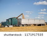 semi truck getting loaded with grain at harvest time - stock photo