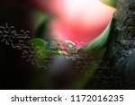 plants background with... | Shutterstock . vector #1172016235