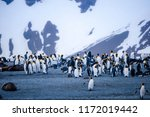 cute penguins  seals  sea lions ... | Shutterstock . vector #1172019442