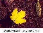 autumn maple leaf lies on stony ... | Shutterstock . vector #1172052718