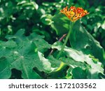 beautiful spike flower red... | Shutterstock . vector #1172103562