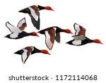 Flying Duck. Realistic Vector...