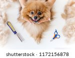 a portrait of a professional... | Shutterstock . vector #1172156878
