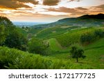 vineyards in schwarzwald hills. | Shutterstock . vector #1172177725