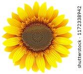 vector sunflower icon isolated... | Shutterstock .eps vector #1172338942