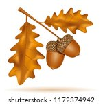 autumn oak acorns with leaves... | Shutterstock .eps vector #1172374942