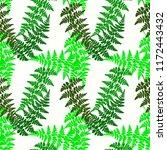 fern frond herbs  tropical... | Shutterstock .eps vector #1172443432