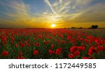 Poppies Flower Wallper
