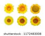 Sunflower Isolated White Background - Fine Art prints