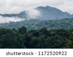 the lush tropical rainforest of ... | Shutterstock . vector #1172520922