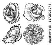 flower rose set isolated on... | Shutterstock . vector #1172525275