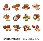 cartoon nuts and seeds.... | Shutterstock .eps vector #1172589472