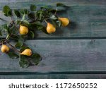 on a wooden background a branch ... | Shutterstock . vector #1172650252