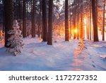 Winter Forest. Christmas...