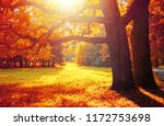 fall trees in sunny october... | Shutterstock . vector #1172753698
