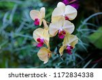 floral background. yellow...   Shutterstock . vector #1172834338