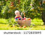 child picking apples on a farm... | Shutterstock . vector #1172835895