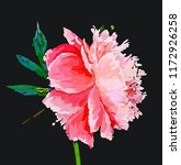a picturesque peony flower.... | Shutterstock .eps vector #1172926258
