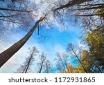into the forest during sunset.... | Shutterstock . vector #1172931865