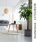 plant next to table on rug in...   Shutterstock . vector #1173128158